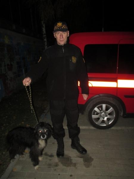 Pies znaleziony na ulicy Kościerskiej