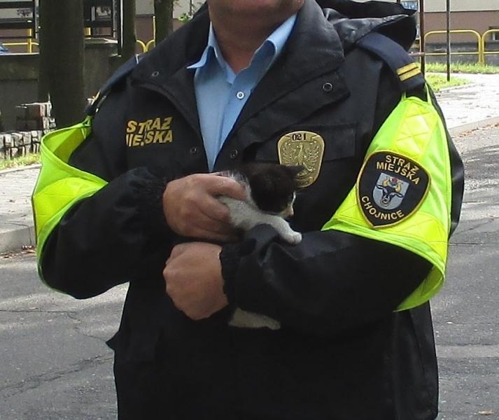 Kotek znaleziony na ulicy Młodzieżowej