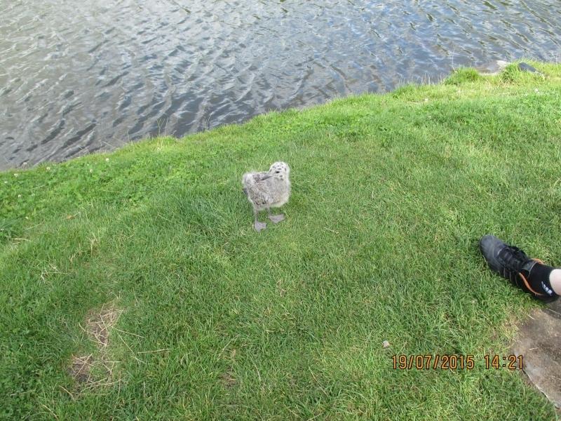 Ptak znaleziony w Parku 1000-lecia