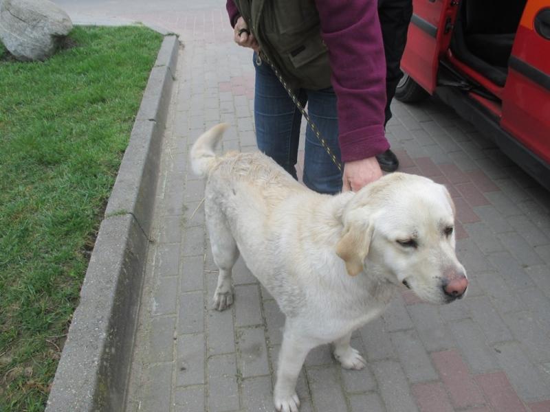 Pies z ul. Łużyckiej