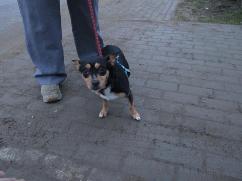 Pies z ul. 31 Stycznia