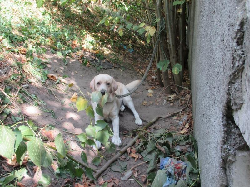 Pies z ul. Czarna droga