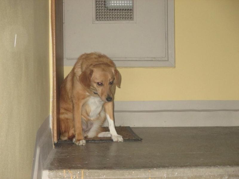 Pies z ul. Sportowej