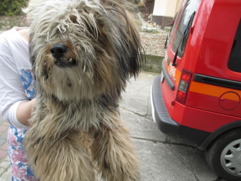 Pies z ulicy Angowickiej