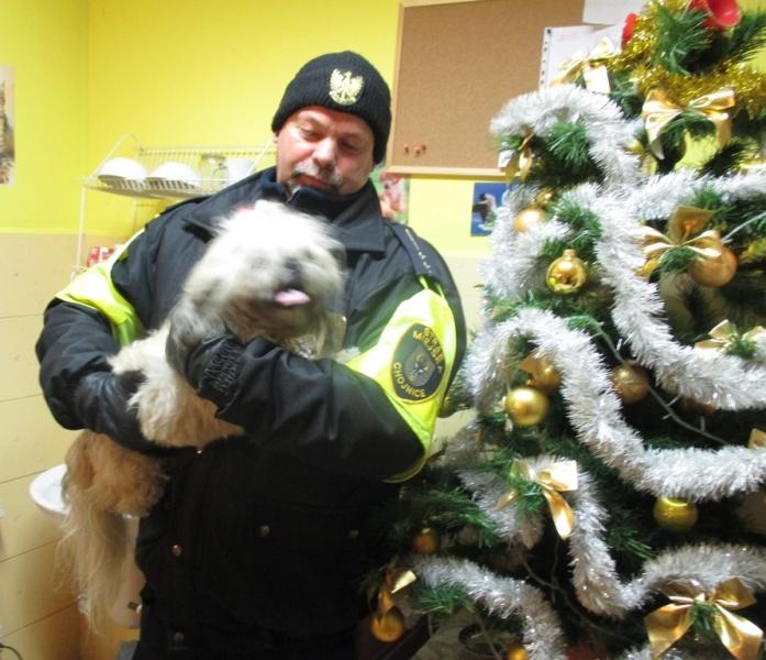 Pies z ulicy Bytowskiej