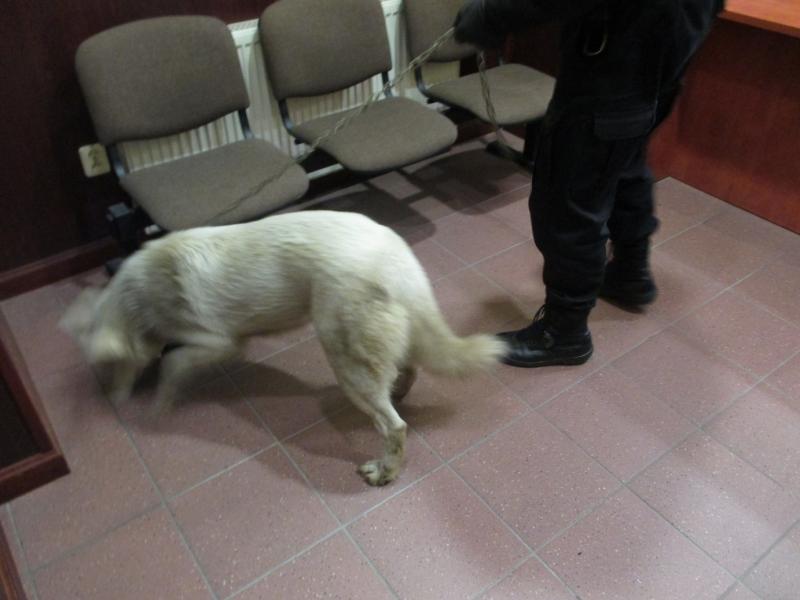 Pies z ulicy Gałczyńskiego