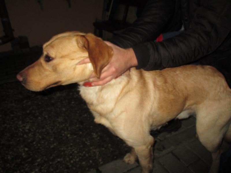 Pies z ulicy Młodzieżowej 15.12.16