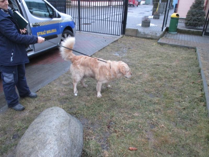 Pies z ulicy Mickiewicza