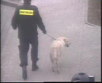 Pies z ulicy Ogrodowej