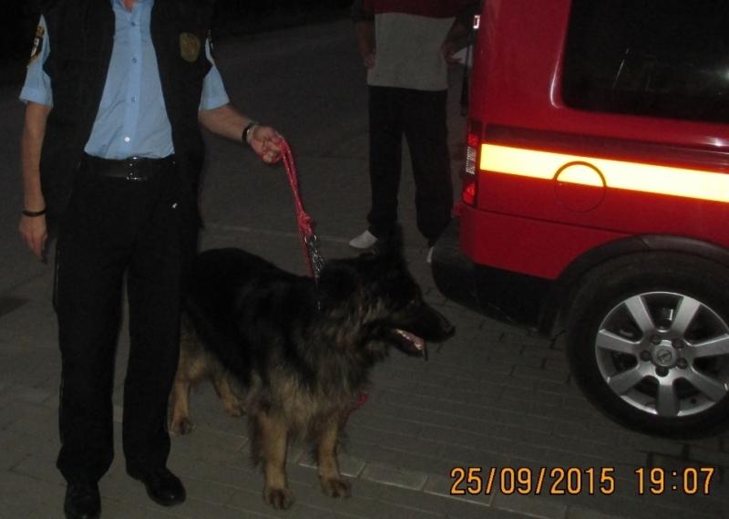 Owczarek znaleziony przy ulicy Lichnowskiej