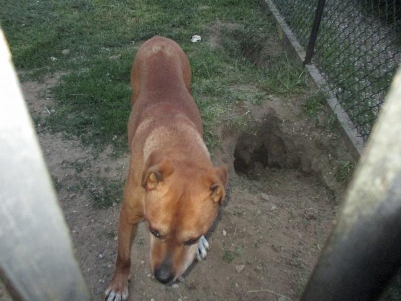 pies z ulicy Ceynowy