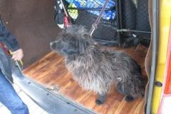Pies znaleziony na ulicy Zielonej