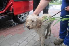 Pies z ul. Cechowej