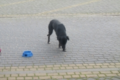 Pies z ul. Kościerskiej