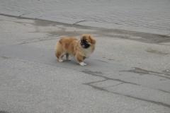 Pies z ulicy Grunowo