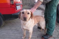 Pies z ulicy Ks. Pomorskich