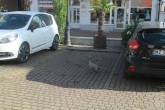 Ptak z ul. Gimnazjalnej