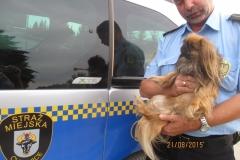 Pies znaleziony na ulicy Jana Pawła II