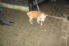 pies z ul. Szpitalnej