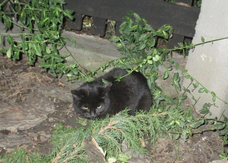 Potrącony Kot Ul. Prochowa
