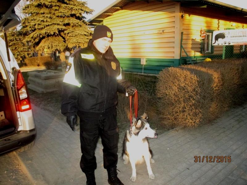 Pies Z Ulicy Bałuckiego
