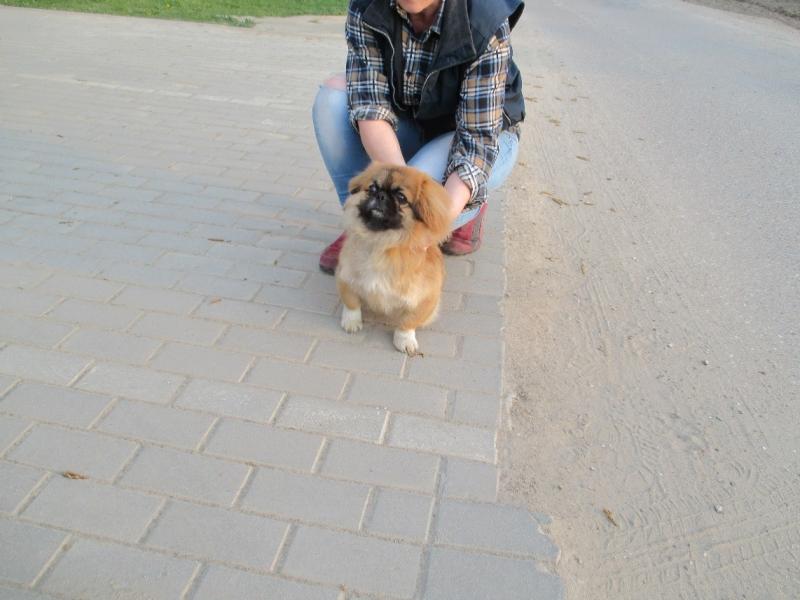 Pies Z Ulicy Gałczyńskiego 2
