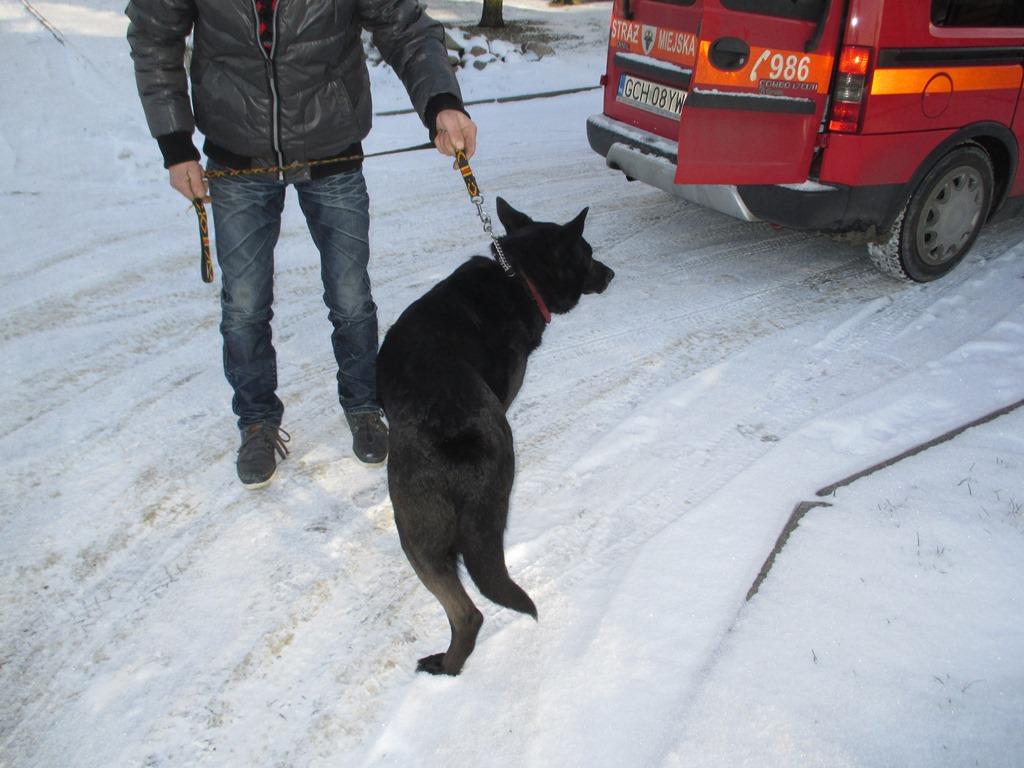 pies-z-ul-galczynskiego