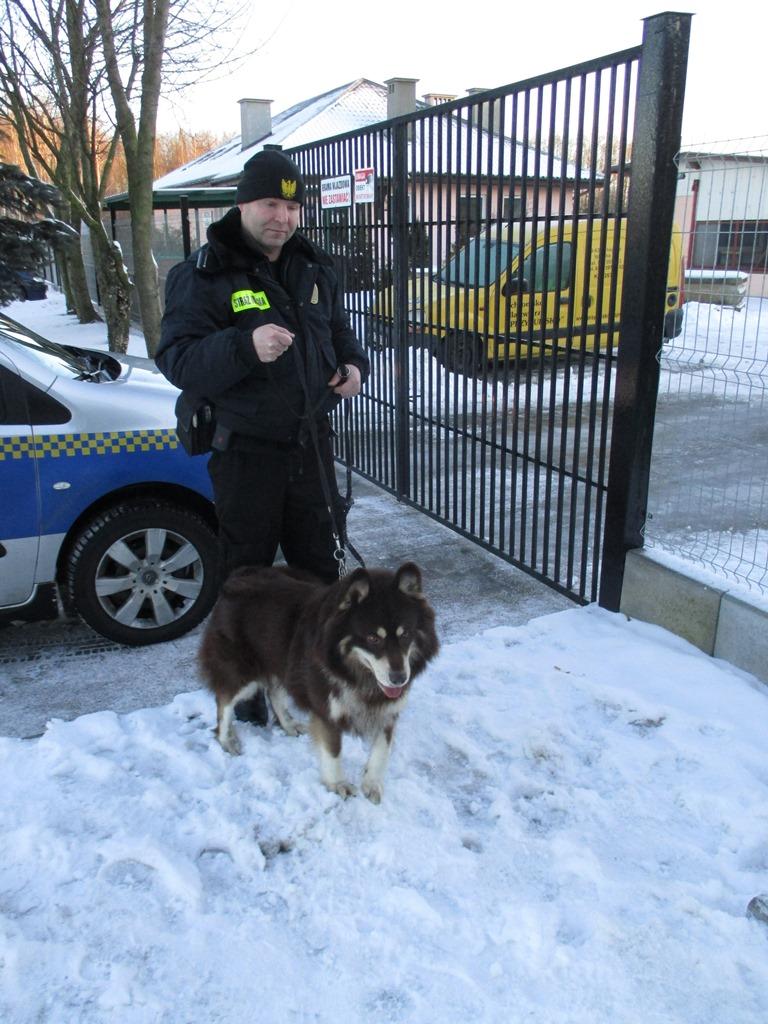 Pies z ulicy Morozowa