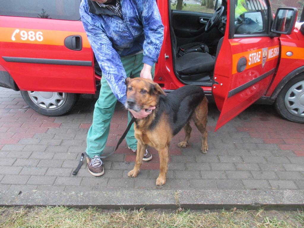 Pies z ulicy Tucholskiej