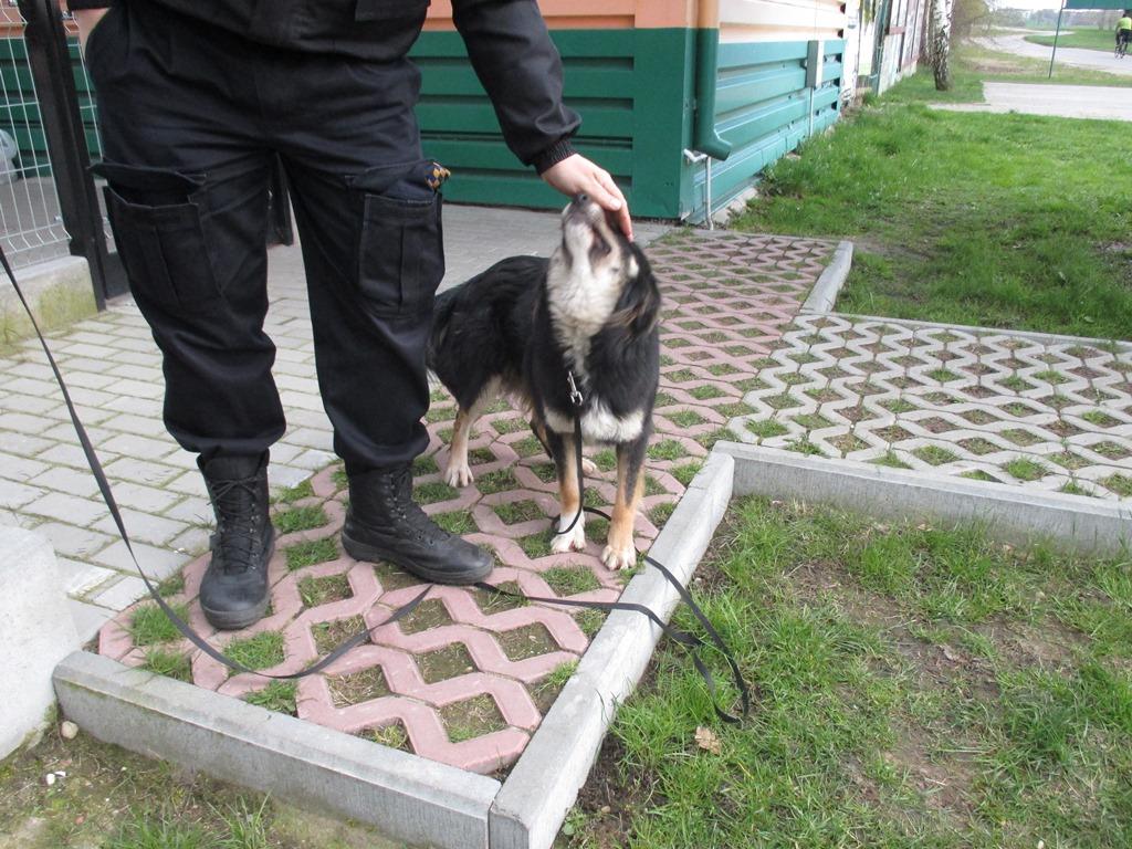 Pies z ulicy Jantarowej