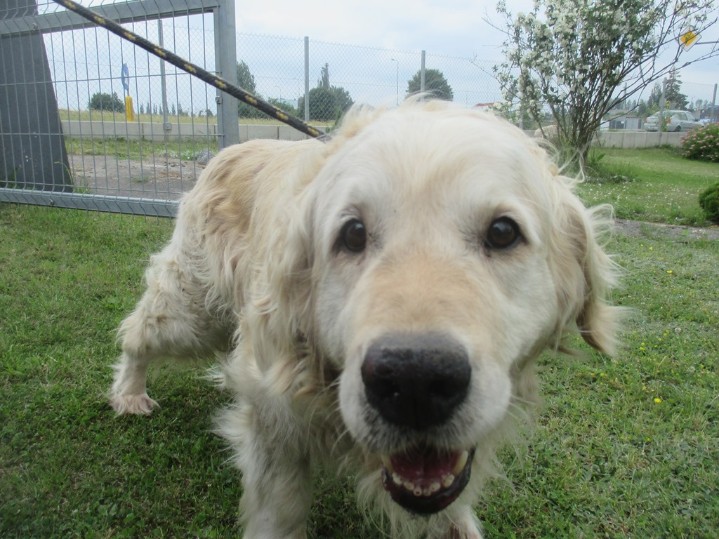 Pies z ul. Tucholskiej
