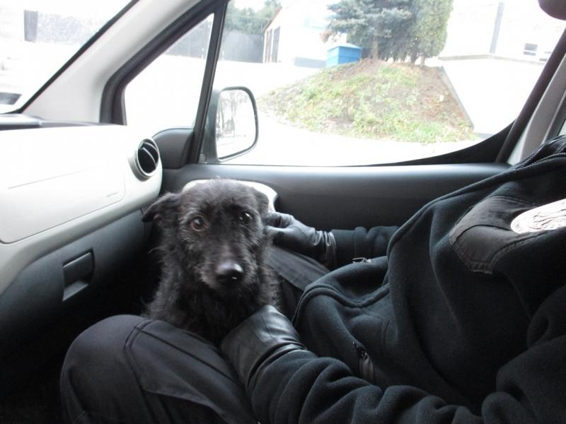 Pies z ulicy Gdańskiej