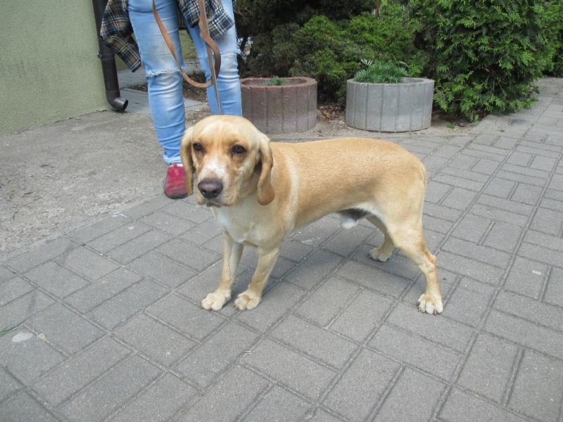 Pies z ulicy Rzepakowej
