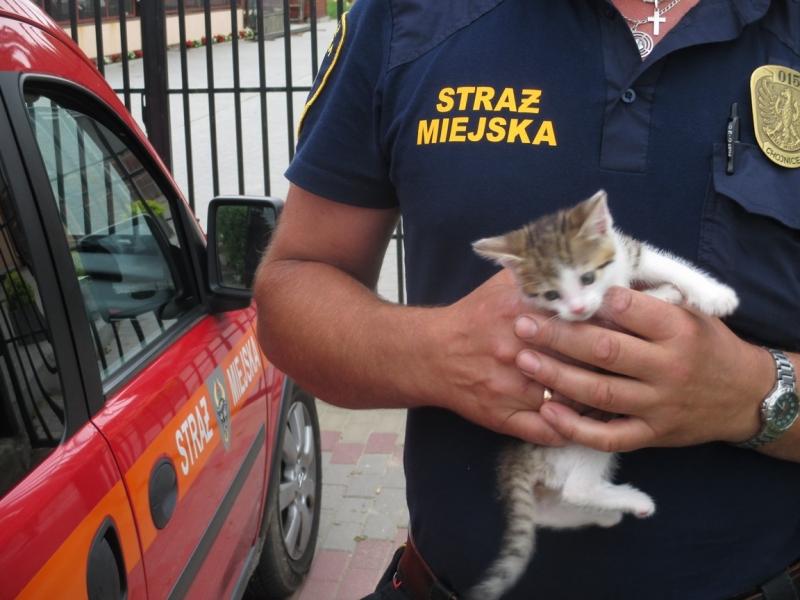 kotek z ul. Batalinów Chłopskich
