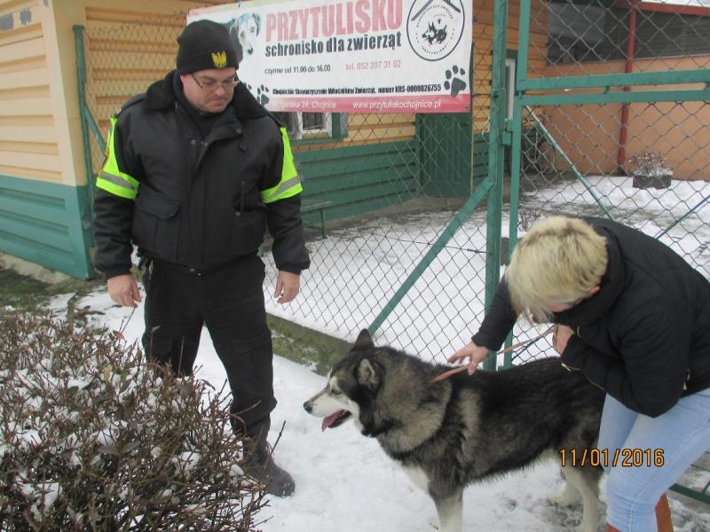 pies z ulicy Młodzieżowej