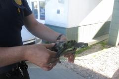 Żółw z ul. Leśnej