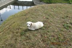 Pies znaleziony w Parku 1000-lecia