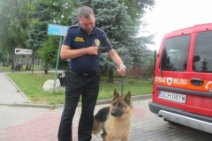 Pies ulica Bytowska