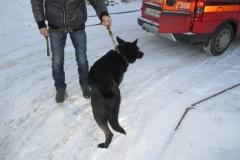 Pies z ul. Gałczyńskiego