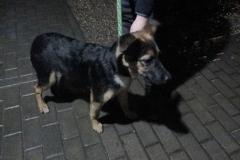 Pies z ul. Piłsudskiego