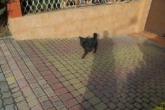 Pies z ulicy Armii Ludowej