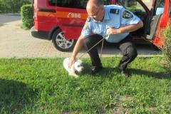 Pies z ulicy Człuchowskiej