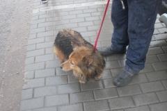 Piesek z ulicy Gdańskiej