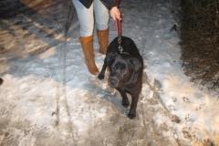 pies znaleziny na stacji BP