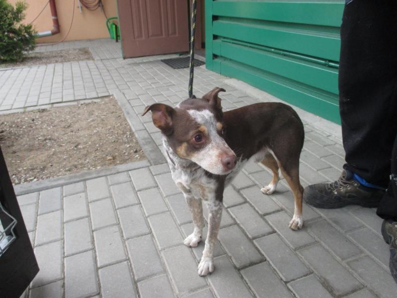 Pies Z Ul. Żeromskiego