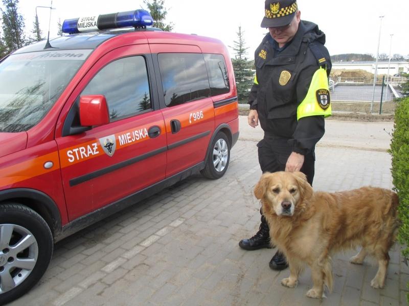 Pies Z Ulicy Warszawskiej