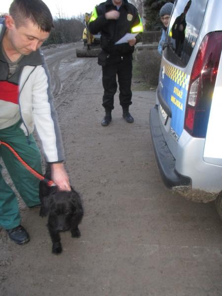 Pies Z Ul. Gdańskiej