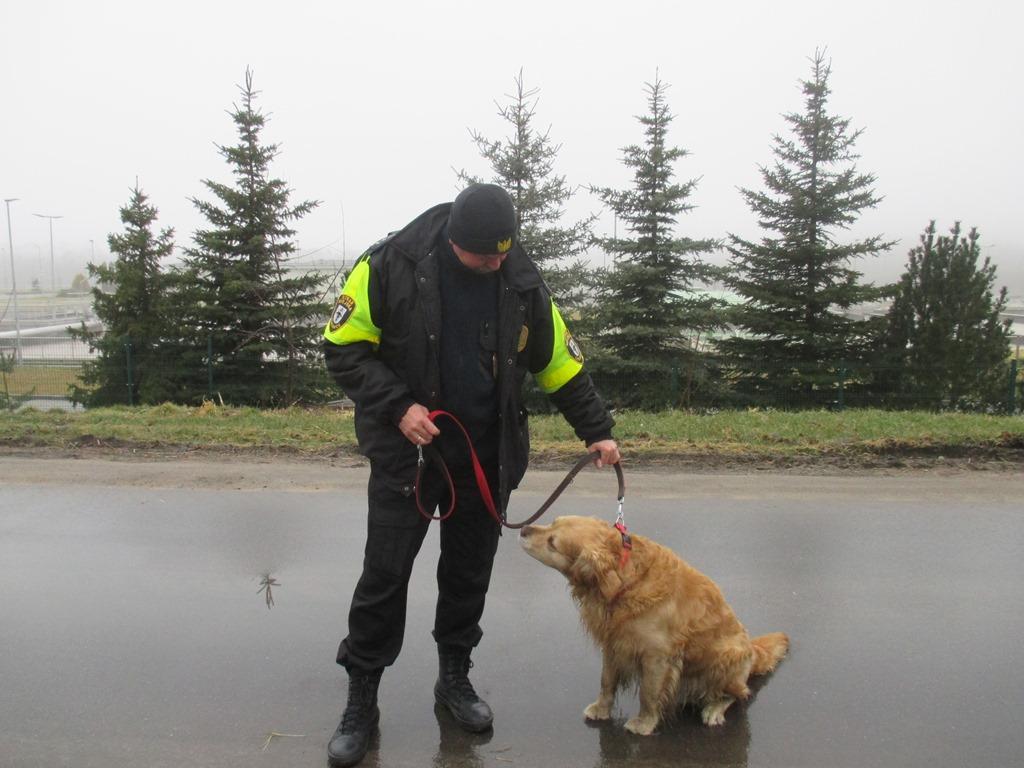 Pies z ul. Gdańskiej (1)