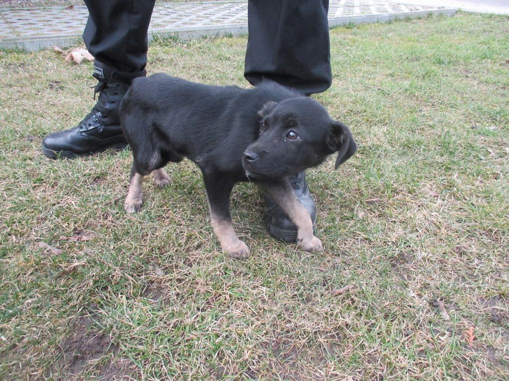 Pies z ul. Wybickiego